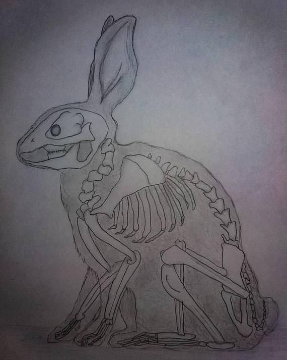 570x713 Rabbit Skeleton Graphite Drawing