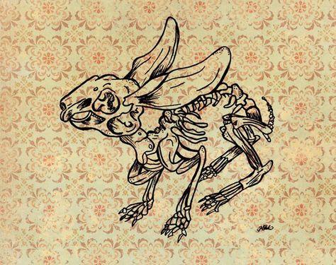 474x375 Resultado De Imagen Para Rabbit Skeleton Veronica Project