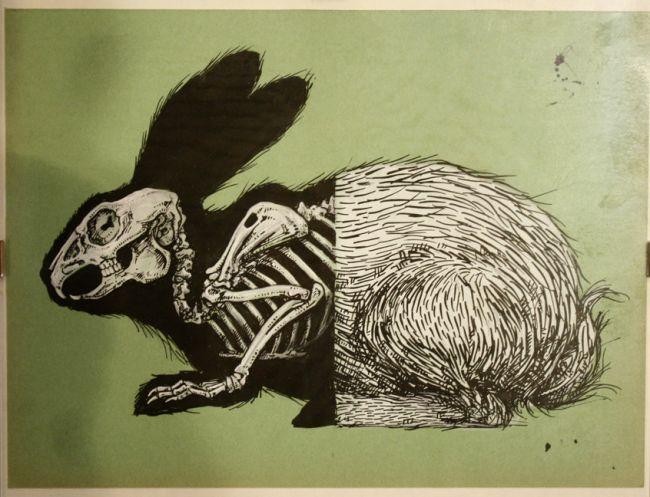 650x497 Roa Rabbit Skeleton Arts Inspiration