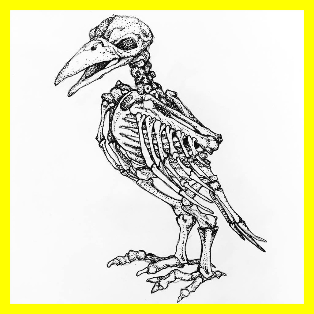 1026x1026 Unbelievable Animal Skeleton Drawing At Getdrawings For Personal