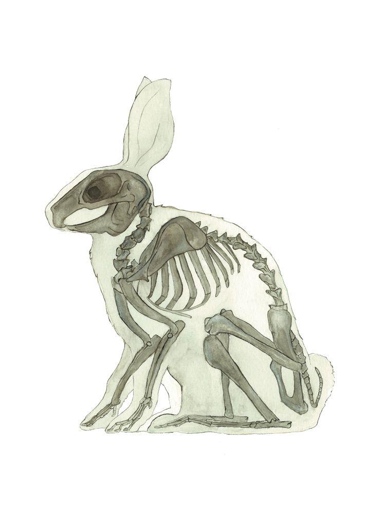 753x1000 Veterinarian Gift Rabbit Print Animal Anatomy Rabbit