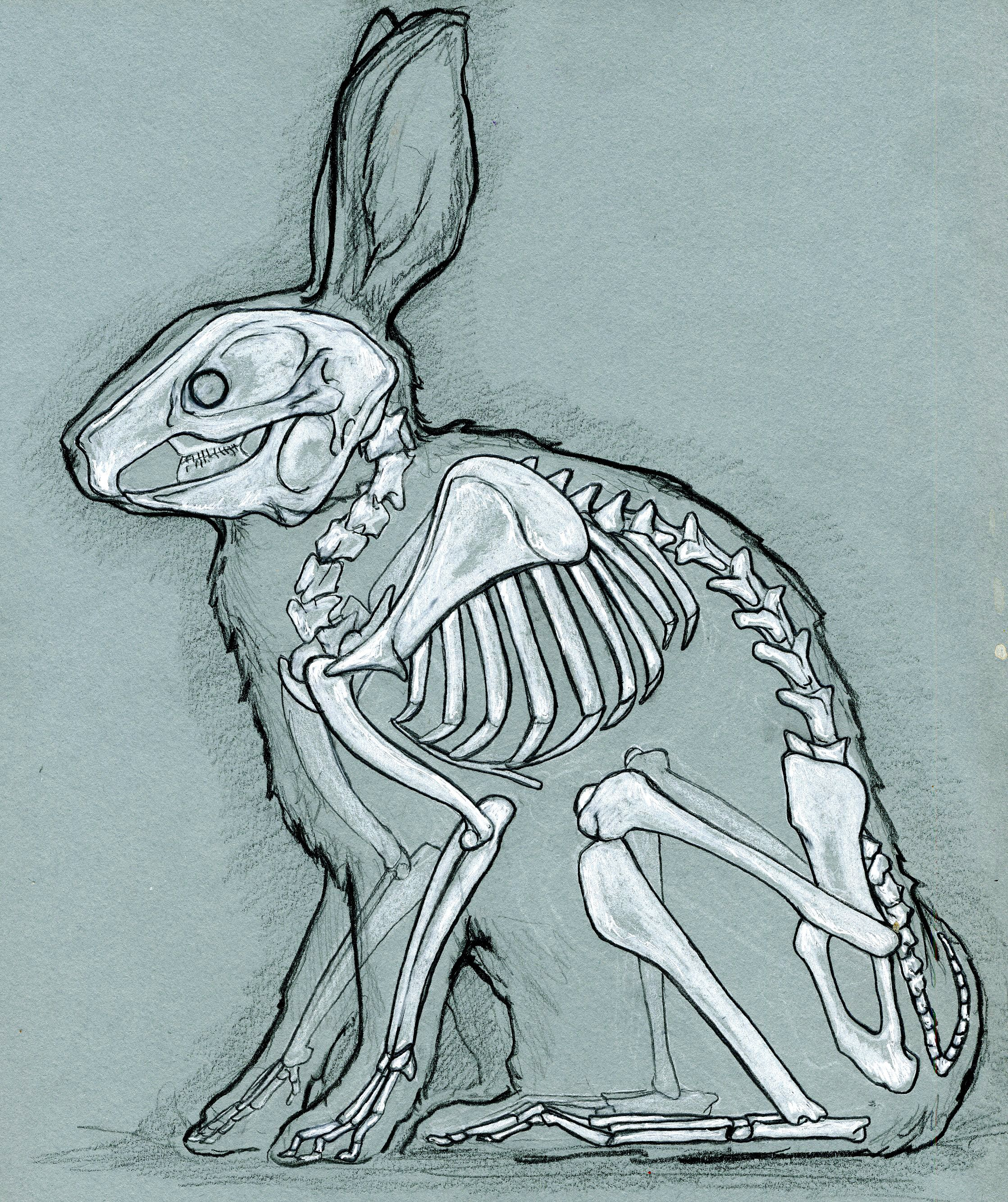 2237x2668 Skeleton Of A Bunny Life In Death Skeletons, Bunny