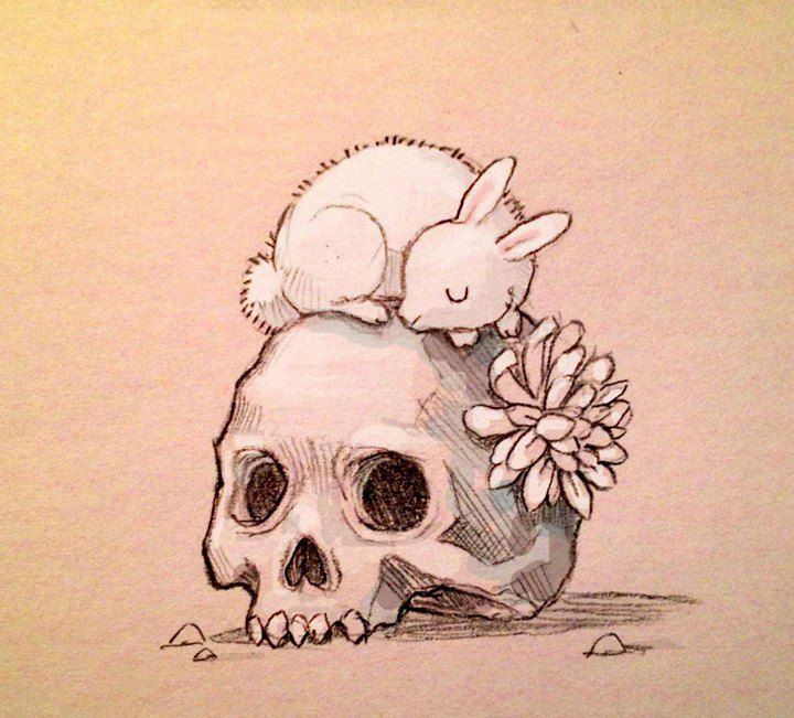 720x651 27 Best Rabbit Drawings, Skulls And Morbid Inspirations Images