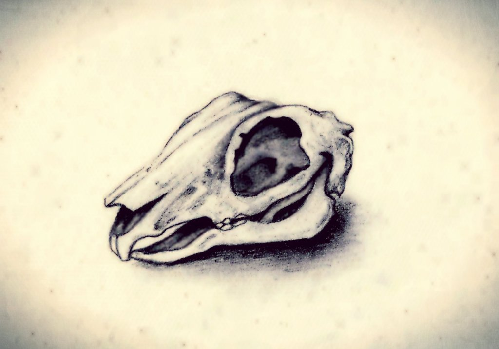 1024x716 Collection Of Rabbit Skull Drawing High Quality, Free