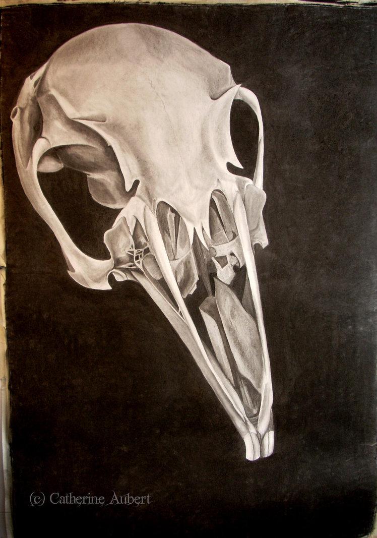 748x1067 Rabbit Skull By Shadow Of Insanity