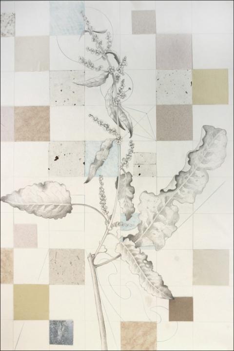 480x720 Pat Cresson + Drawing Gt Botanical Drawings