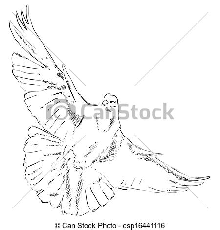 Realistic Dove Drawing at GetDrawings com | Free for