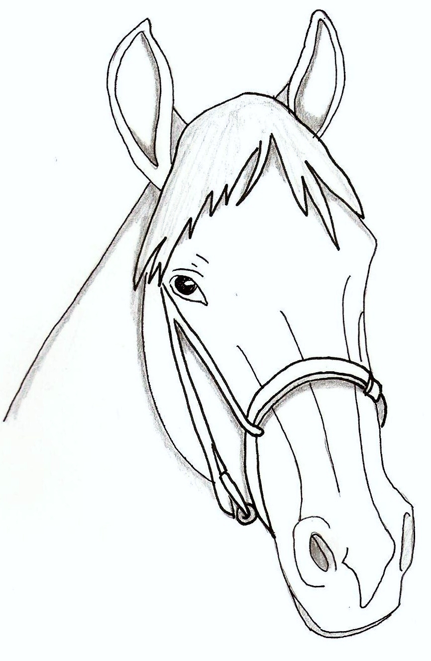 Realistic Horse Head Drawing At Getdrawings Free For Personal