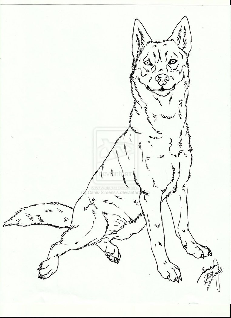 Realistic Husky Drawing at GetDrawings.com | Free for personal use ...