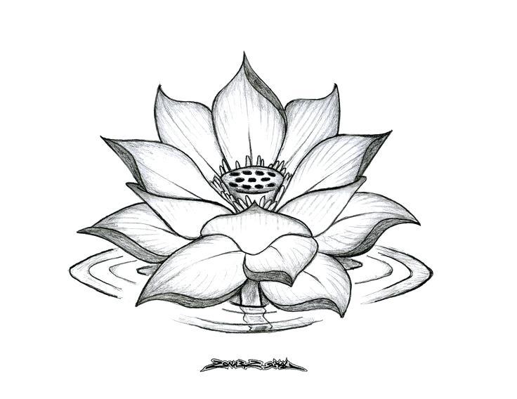 736x568 Tumblr Plant Drawings Drawings Garden City High School Coolman.club