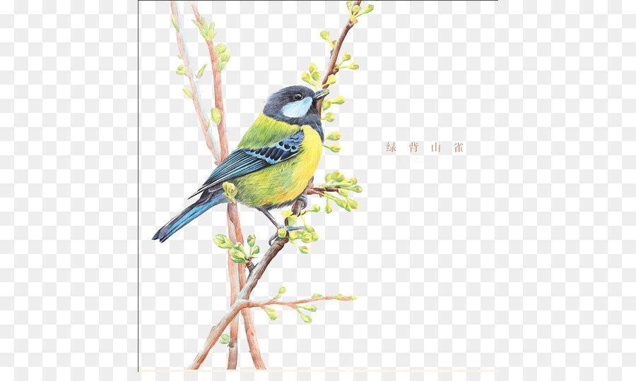 900x540 Bird Drawing Colored Pencil Illustration