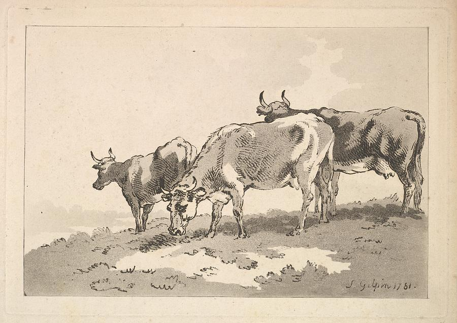 900x636 Three Cows Standing On The Ridge Drawing By Thomas Rowlandson