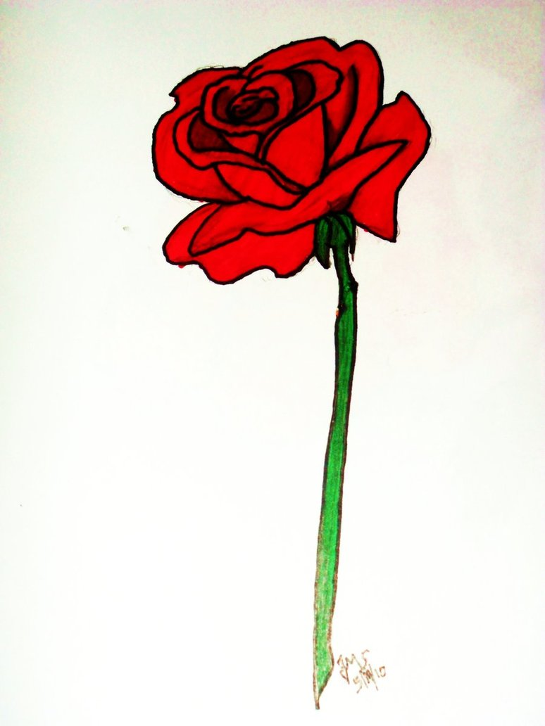 774x1032 Red Rose Drawing By Untalentedwriter