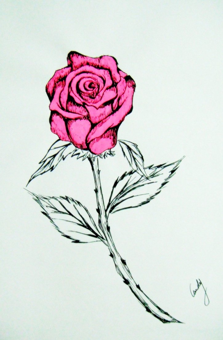 725x1102 Pink Rose Drawing By Andy023
