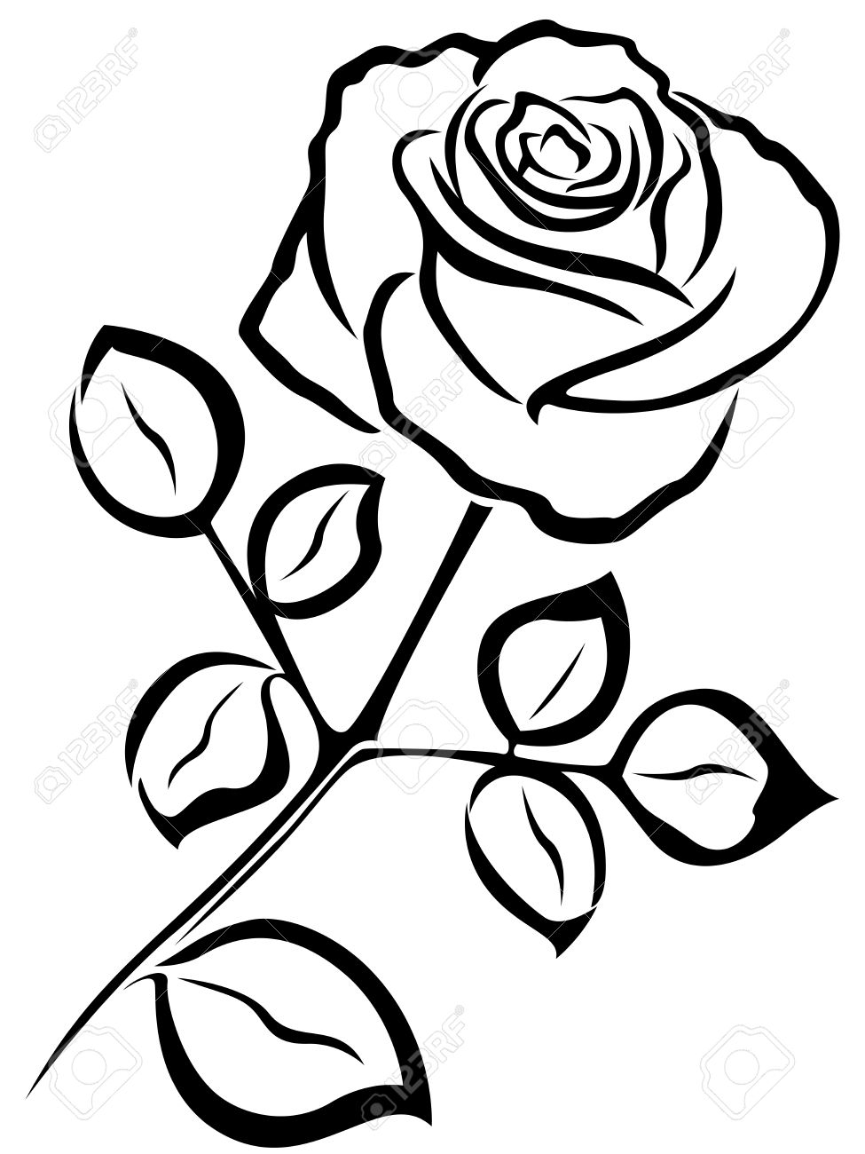 975x1300 Line Drawing Of Rose Flower Black Vector Outline Of Single Rose
