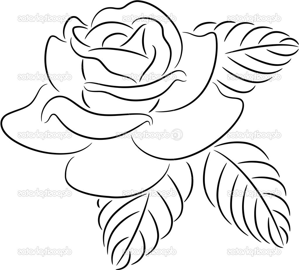 1024x925 Outline Flowers Drawing Rose Flower Fine Of Transitionsfv
