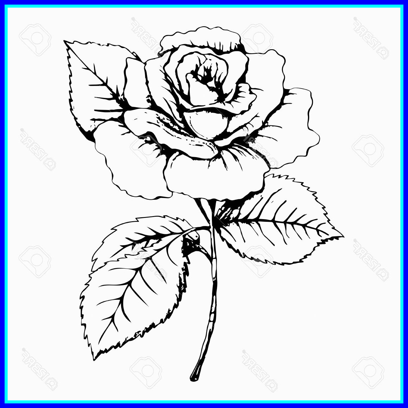 1350x1350 Incredible Rose Black And White Drawing At Getdrawings