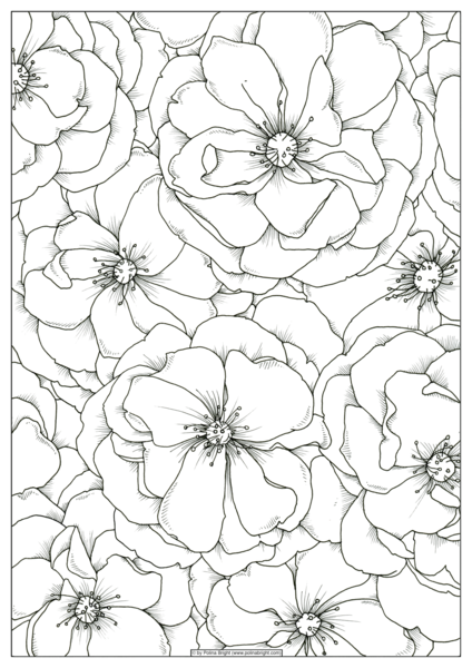 424x600 Set Of Watercolor Coloring Pages Polina Bright Art
