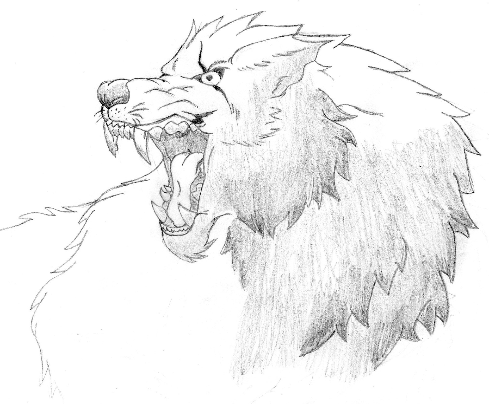 1877x1554 Angry Wolf Drawings Angry Wolf Sketch