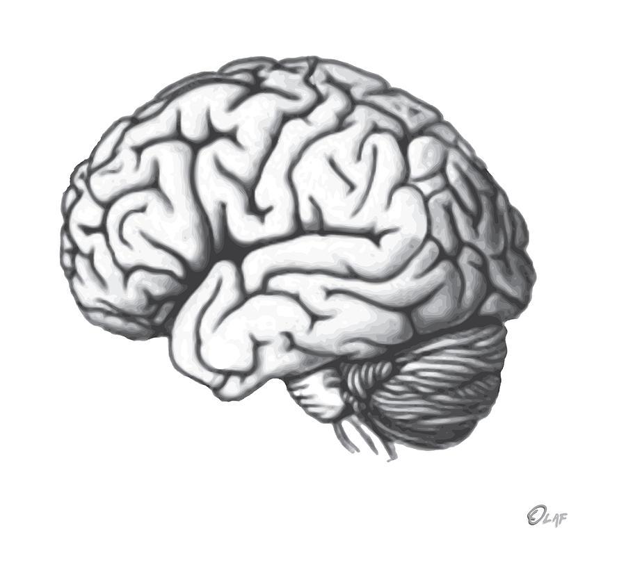 900x839 Brain Shift Drawing By Del Gaizo