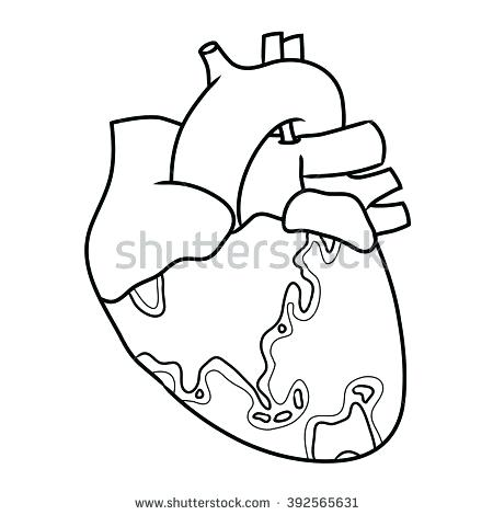 450x470 Anatomical Heart Outline Anatomical Heart Earth Concept Outline