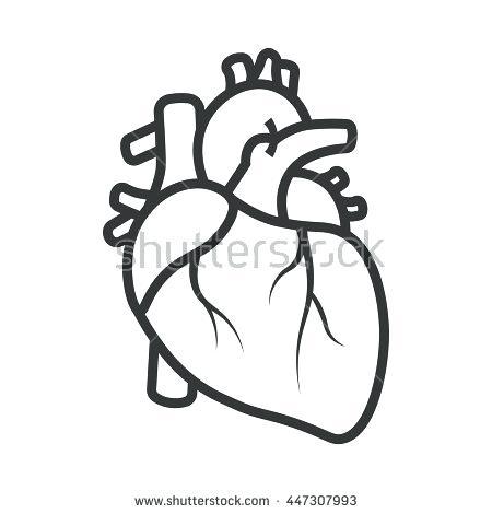 450x470 Anatomical Heart Outline Stylish Inspiration Ideas Anatomical