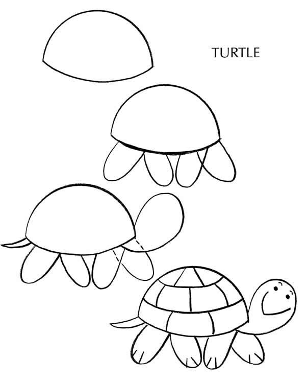 602x750 How To Draw A Turtle Site Includes, Pets Dogs, Cats, Birds