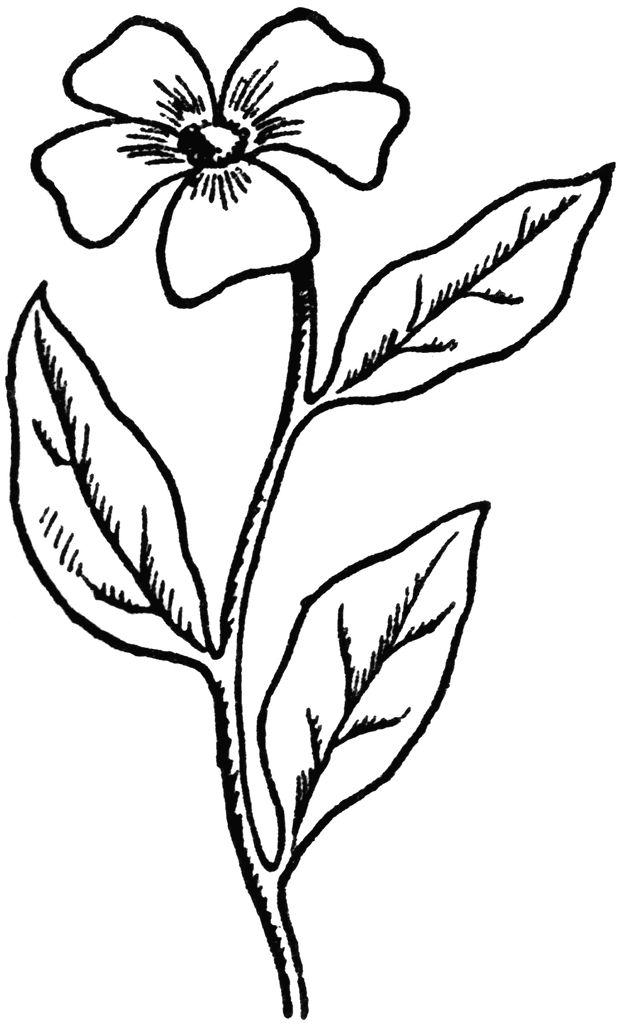 Simple Flower Drawing In Black And White at GetDrawings.com | Free ...