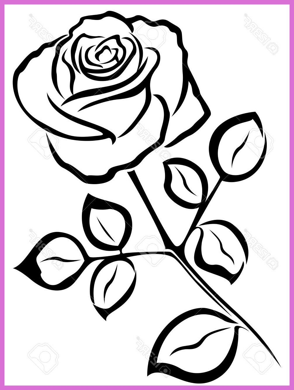 1005x1330 Astonishing How To Draw A Realistic Rose Flower With Pic Oil