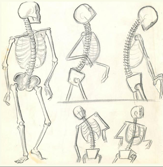 670x686 Collection Of Spine Drawing Simple High Quality, Free
