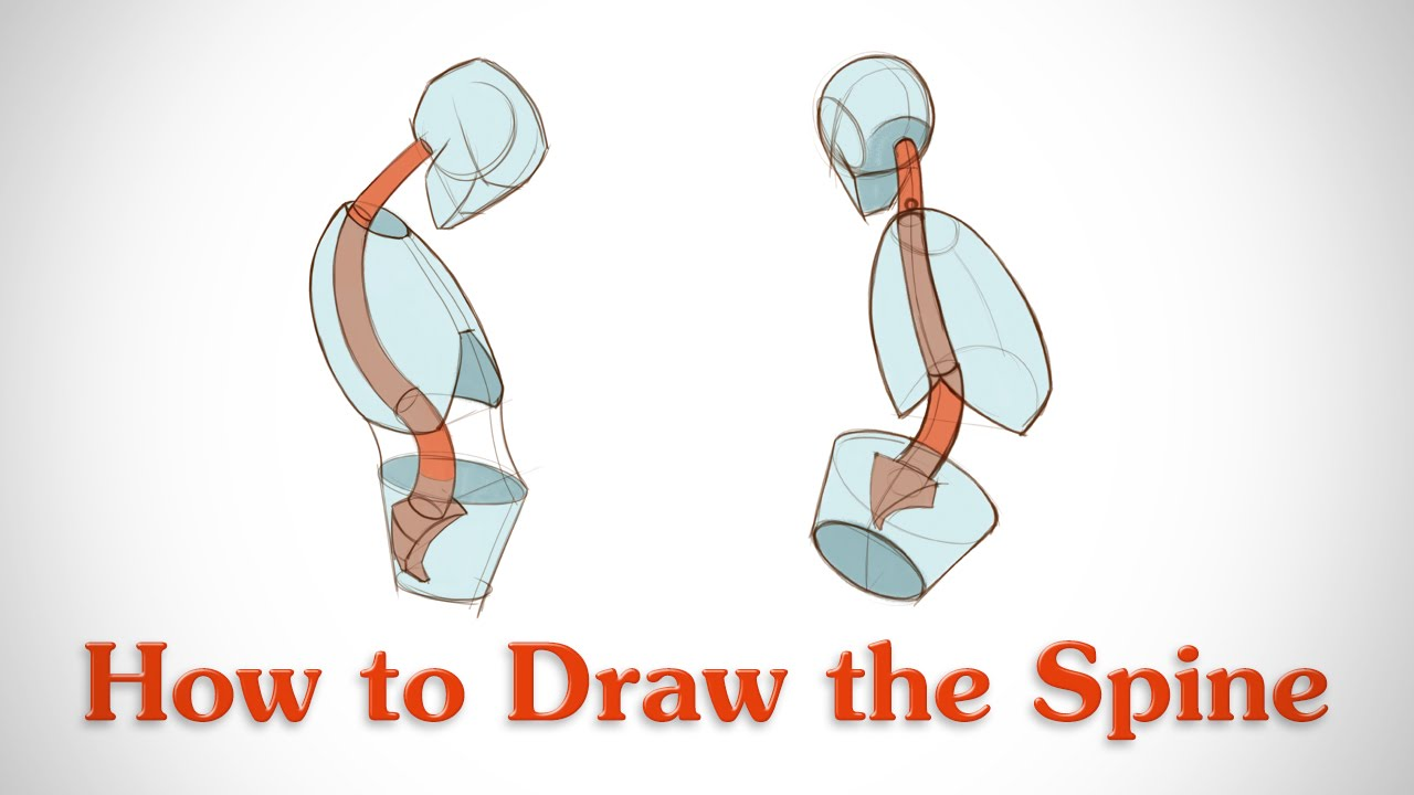1280x720 How To Draw The Spine
