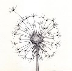 236x233 Line Drawing Dandelion Go Back Gt Pics For Gt Cute Pencil Drawings
