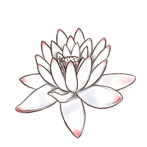 500x500 Draw A Lotus Flower Lotus Flower, Lotus And Watercolor