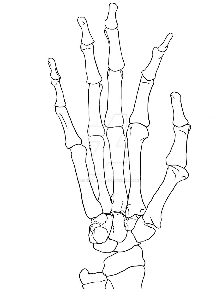 Skeleton Hand Drawing Tumblr