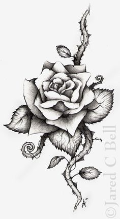 236x431 Drawn Rose Blood Drawing