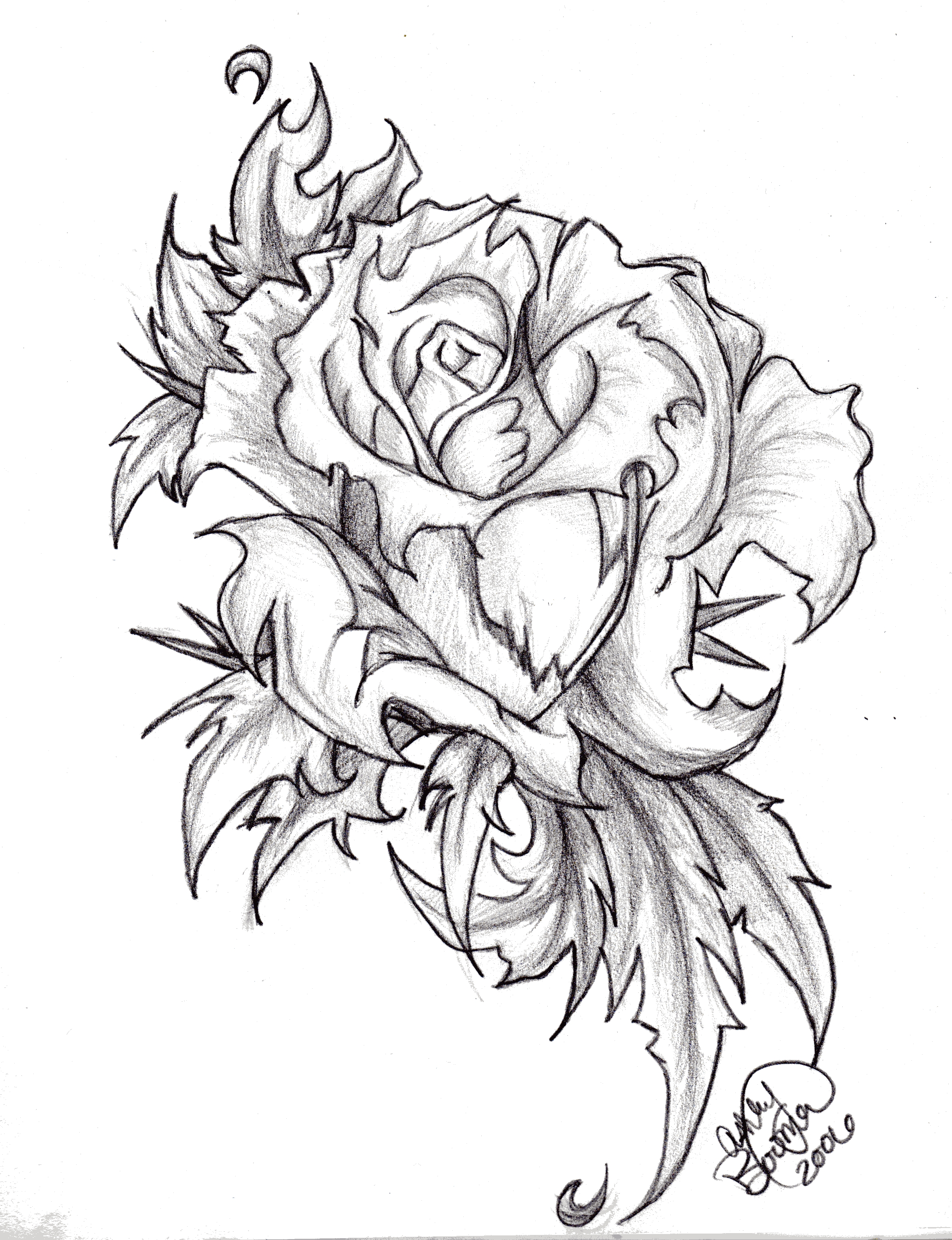 2065x2690 Heart And Rose Drawings In Pencil Group