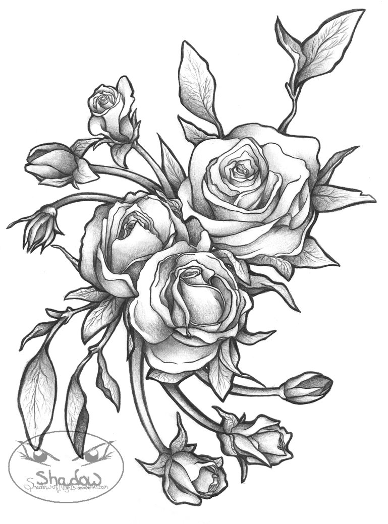 769x1039 Hoontoidly Roses Drawings Images