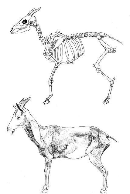 Skeleton Lying Down Drawing