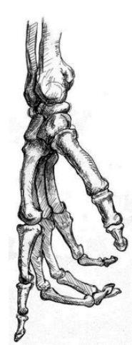 185x483 Great Human Skeleton Drawing 107 Academic Studies