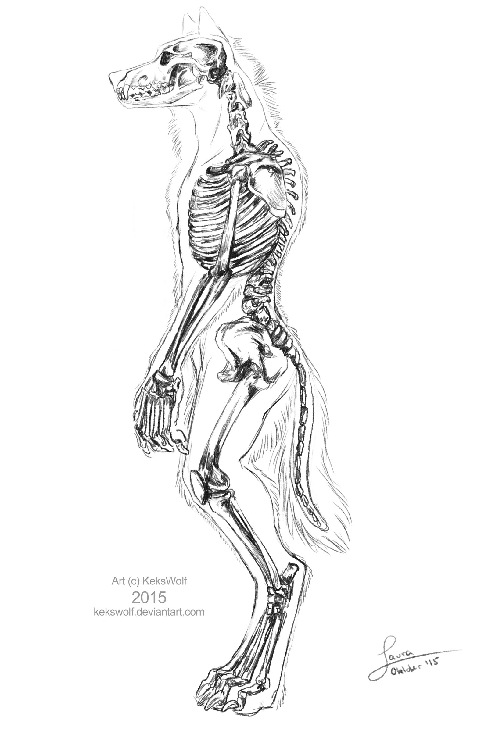 1600x2414 Werewolf Skeleton By Kekswolf