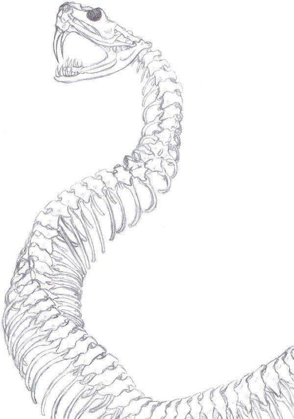 600x855 Snake Skeleton Spine Drawing
