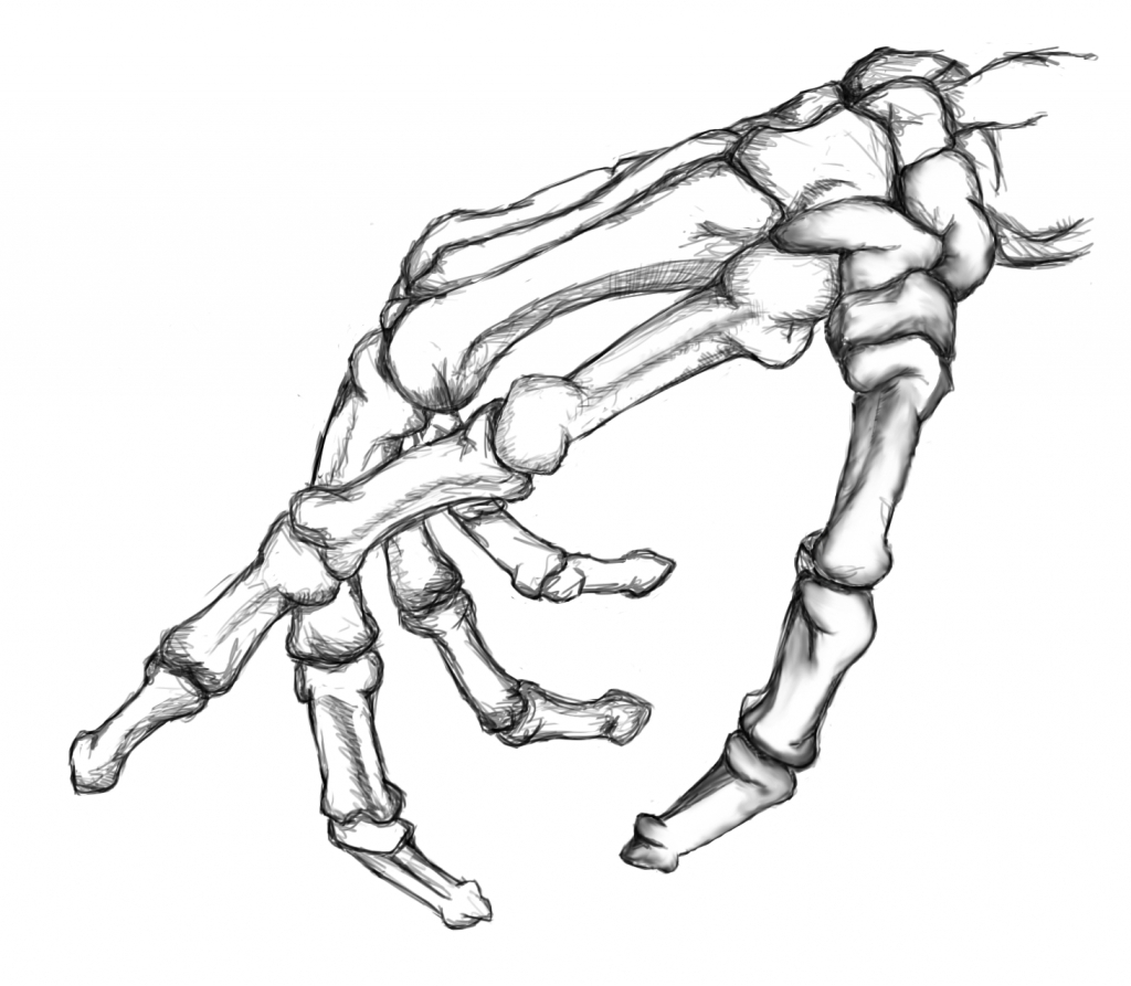 1024x893 Collection Of Skeleton Hand Drawing High Quality, Free