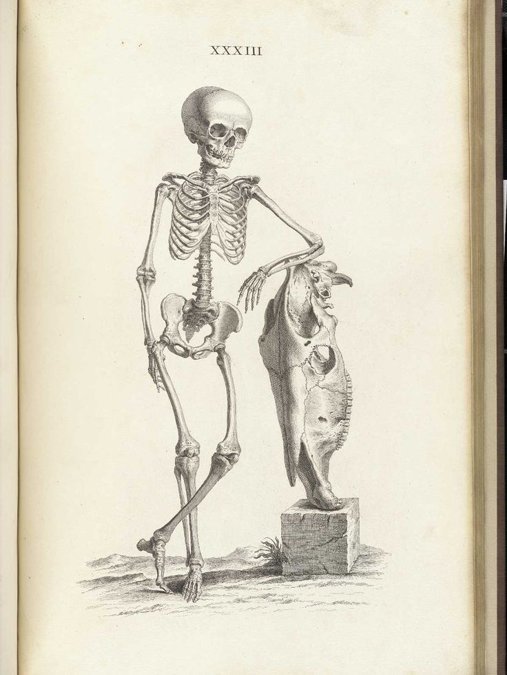 736x980 42 Best Skeletons From The Shelves Images On Planks
