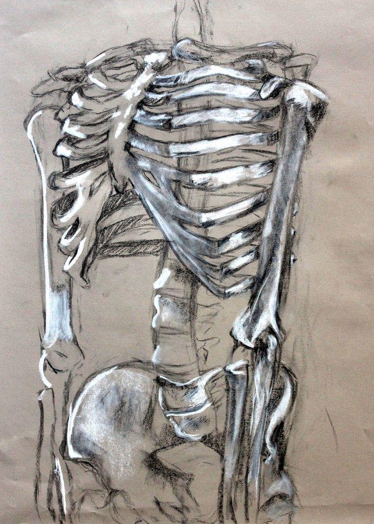 731x1024 Clara Lieu, Skeleton Drawing Assignment, Conte Crayon On Toned