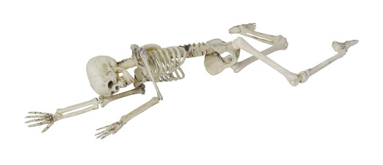 557x240 Search Photos Skeleton