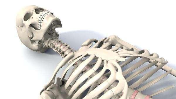 600x338 Skeleton Lying Down, Animation