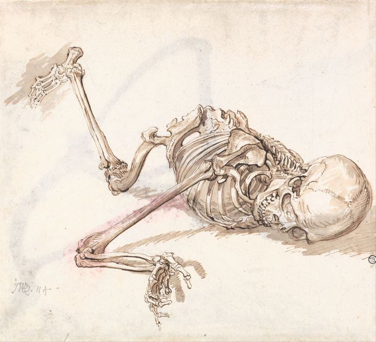 736x670 The 48 Best Human Skeleton And More Images On Bones
