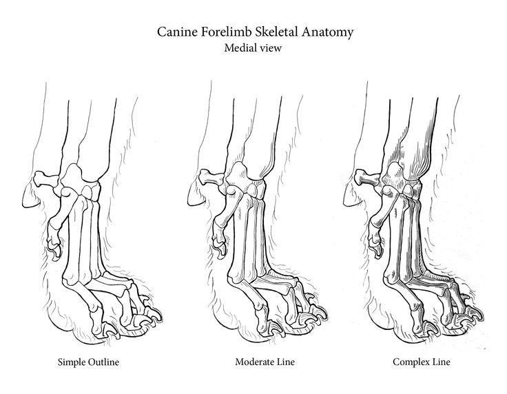 736x572 81 Best Animals Images On Animal Anatomy, Dog Skeleton