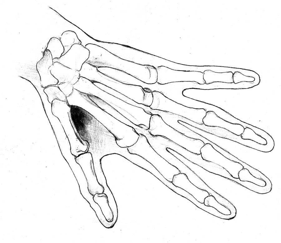 Skull Hand Drawing