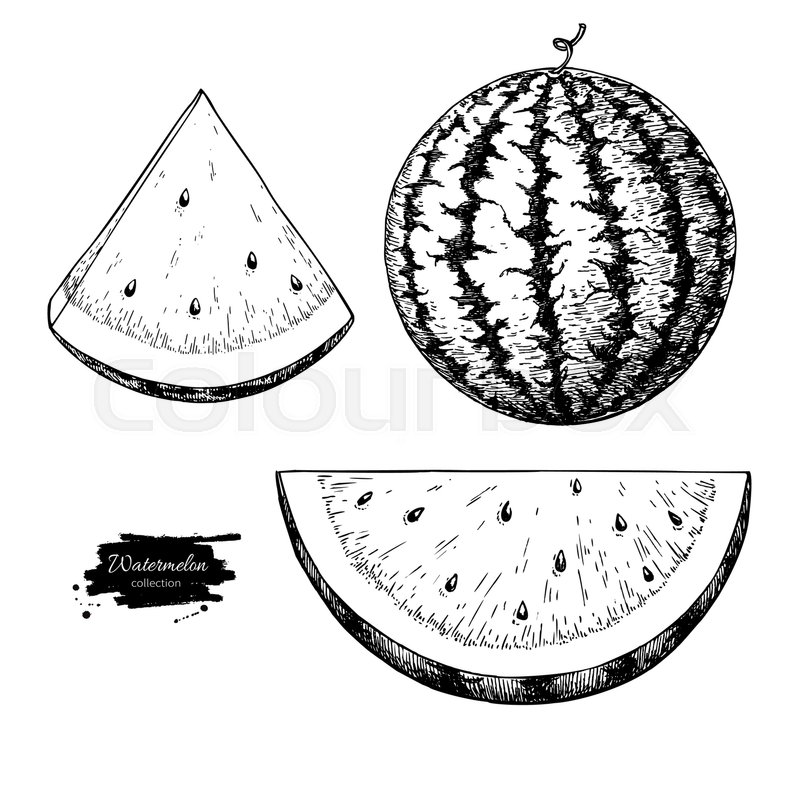 800x787 Watermelon And Slice Vector Drawing Set. Isolated Hand Drawn Berry